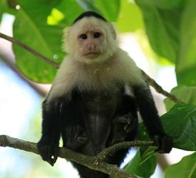 Hiking in Cahuita National Park, Wildlife Experiences in Costa Rica