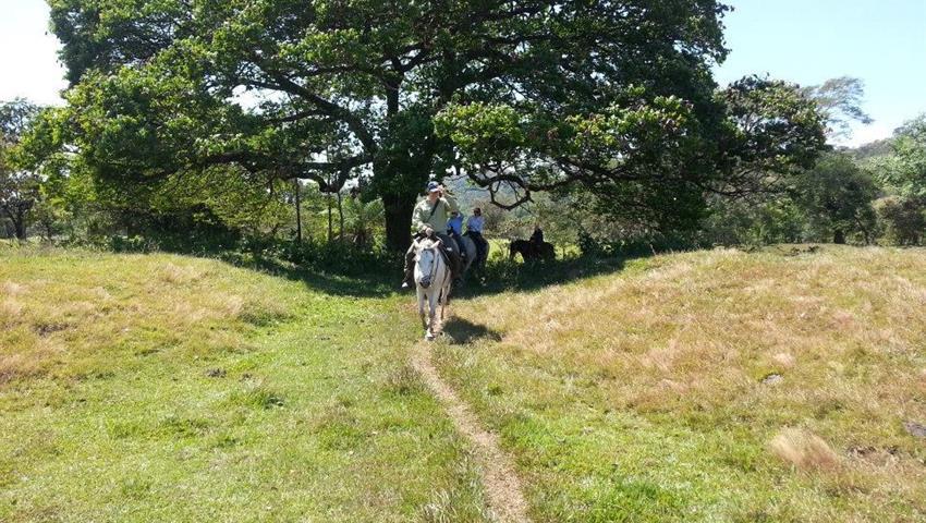 5, Horse Riding Experience in Caldera