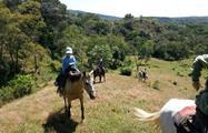 6, Horse Riding Experience in Caldera