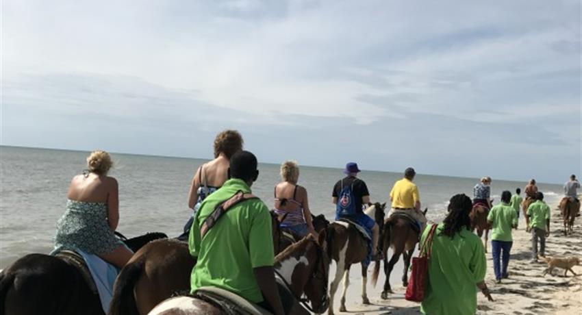 Horseback Ride n' Swim YS Falls, Horseback Ride n' Swim YS Falls & Black River Safari