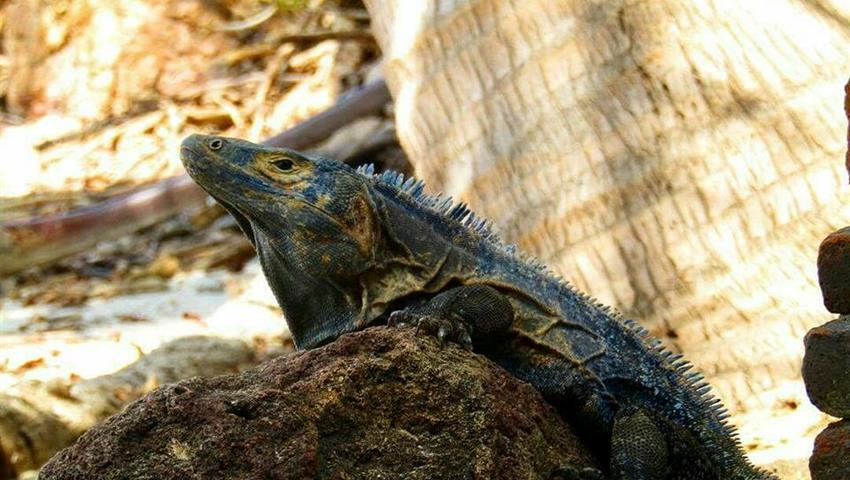 1, Iguana Island Tour
