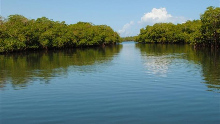 mangroves, Cayo Paradise Snorkeling Full Day Tour