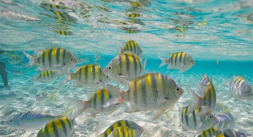 fish cayo paradise, Cayo Paradise Snorkeling Full Day Tour