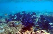 coral reef cayo paradise, Cayo Paradise Snorkeling Full Day Tour