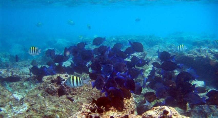 coral reef cayo paradise, Cayo Paradise Snorkeling Full Day Tour