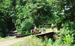 Horses, Jaco 3-Hour Horseback Riding Tour