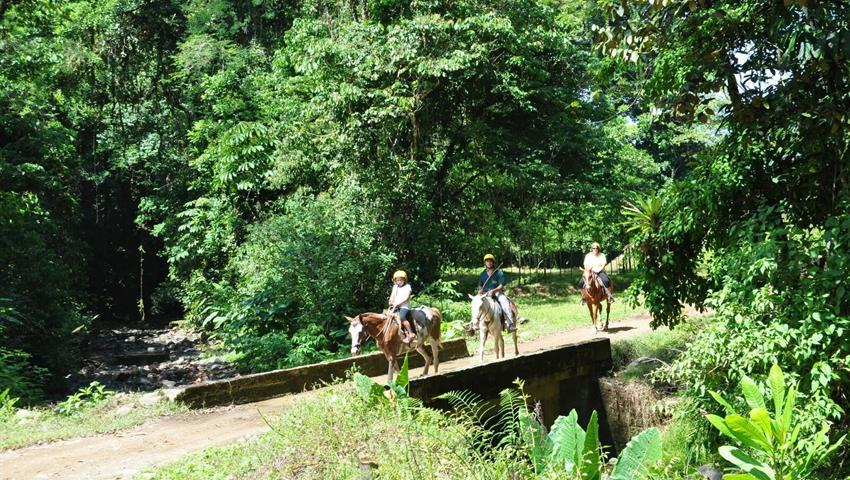 Horses, Jaco 3-Hour Horseback Riding Tour