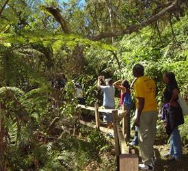 Jamaica's Blue Mountain Hike & Coffee Tour