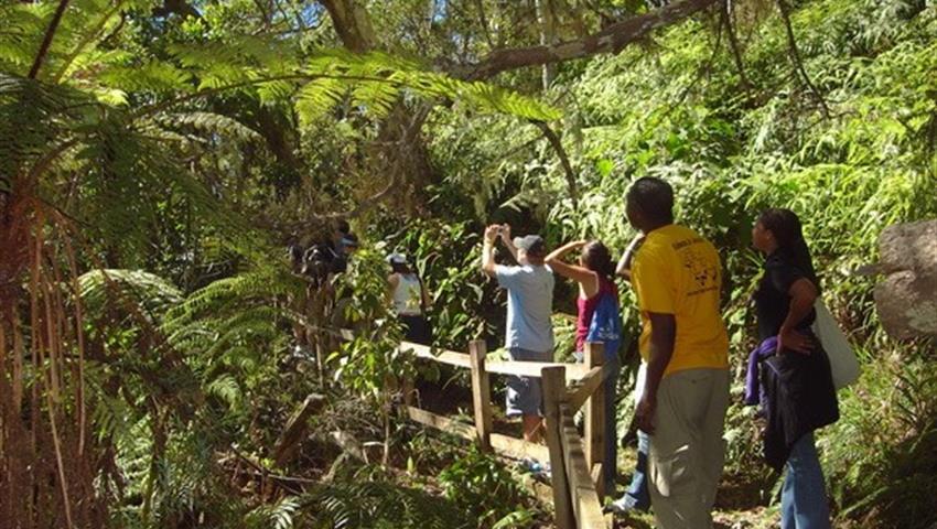 Jamaica's Blue Mountain Hike & Coffee Tour, Jamaica's Blue Mountain Hike & Coffee Tour