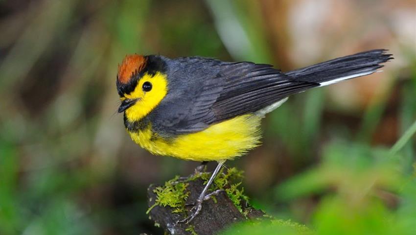 Bird, Juan Castro Blanco Nacional Park 9-Hour Tour