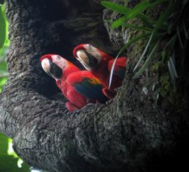 Jungle and Tarcoles River 3-Hour Adventure