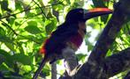 Bird, Jungle and Tarcoles River 3-Hour Adventure