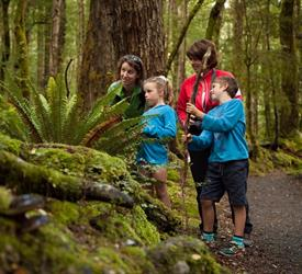 Kepler Track Half Day Guided Walk