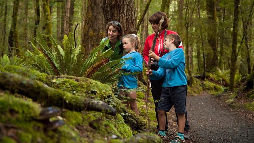 kids tiqy, Kepler Track Half Day Guided Walk