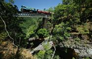Kuranda All Inclusive crossing the topical jumgle, Kuranda All Inclusive