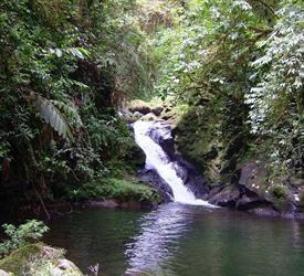 4 Days / 3 Nights Rainforest Hike Tour