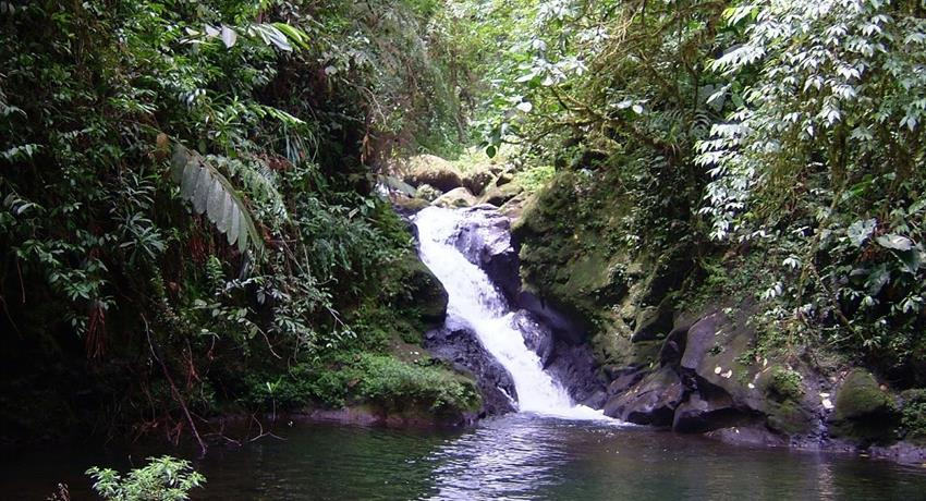 rainforest hike tour waterfalls, 4 Days / 3 Nights Rainforest Hike Tour