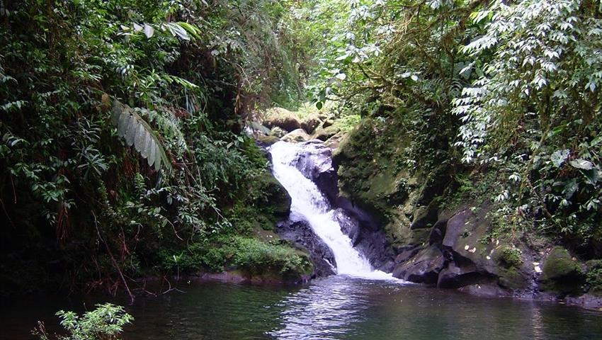 rainforest hike tour waterfalls, 4 Days / 3 Nights Rainforest Hike Tour