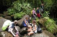 rainforest hike tour group, 4 Days / 3 Nights Rainforest Hike Tour