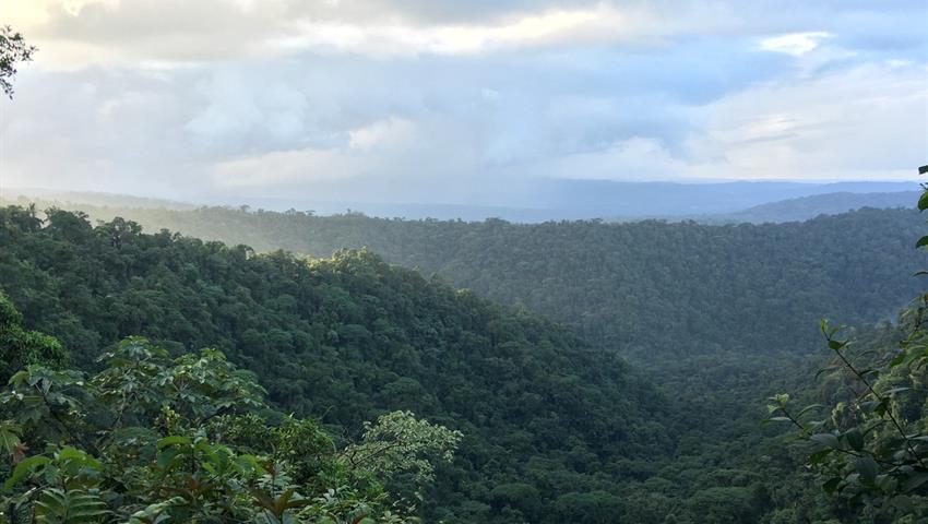 rainforest hike tour landscape, 4 Días / 3 Noches en Bosque Nuboso