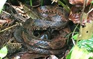rainforest hike tour snake, 4 Days / 3 Nights Rainforest Hike Tour