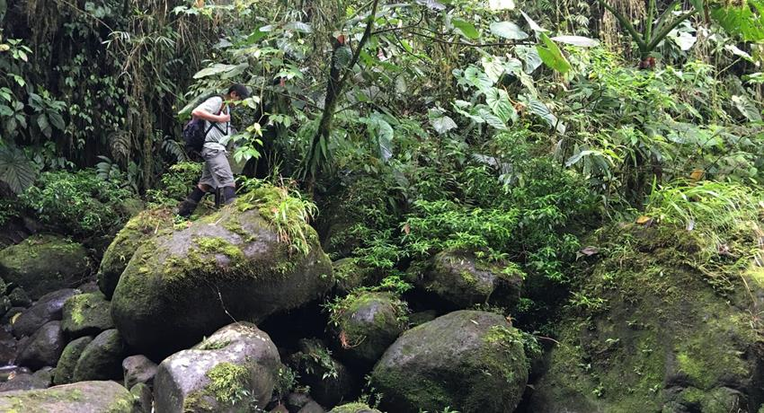 rainforest hike tour guide, 4 Days / 3 Nights Rainforest Hike Tour