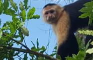 Lake Gatun and Monkey Island Half Day Tour, Tour de Medio Día por el Lago Gatún y la Isla de los Monos desde la Ciudad de Panamá