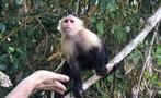 Lake Gatun and Monkey Island Half Day Tour 3, Half Day Tour of Gatun Lake and Monkey Island from Panama City