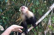 Lake Gatun and Monkey Island Half Day Tour 3, Tour de Medio Día por el Lago Gatún y la Isla de los Monos desde la Ciudad de Panamá
