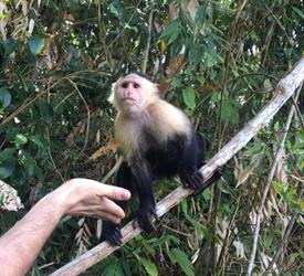 Half Day Tour of Gatun Lake and Monkey Island from Panama City