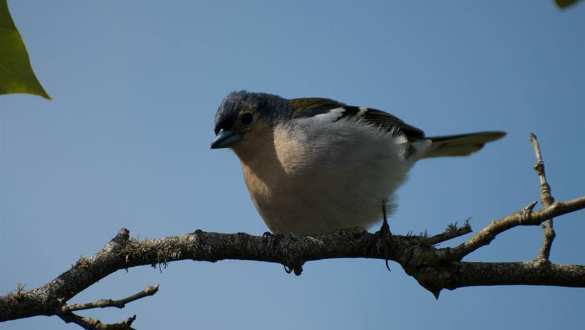 Madeira Birdwatching Full Day Tour, Madeira Birdwatching Full Day Tour