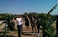 Gourmet Madrid Tours 5, Madrid Wine Tour