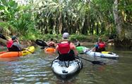 The kayaking group tour, Mangrove Kayak Tour in Isla Damas