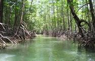 The impressive mangrove, Mangrove Kayak Tour in Isla Damas