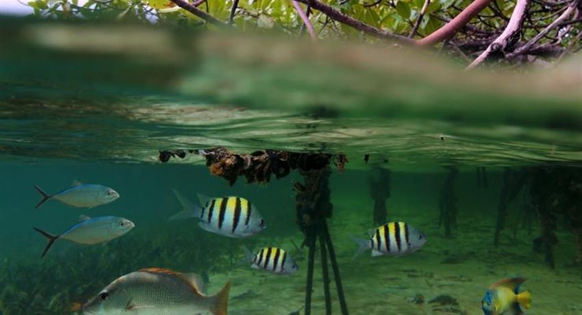 The Mangroves inside, Mangrove Kayak Tour in Isla Damas