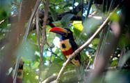 Bird, Manuel Antonio National Park 4-Hour Tour