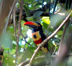 Manuel Antonio National Park 4-Hour Tour