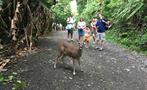 Deer, Manuel Antonio National Park 4-Hour Tour