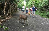 Deer, Tour de 4 Horas al Parque Nacional Manuel Antonio