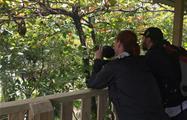 mirador, Tour de 4 Horas al Parque Nacional Manuel Antonio