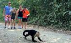 Monkey, Manuel Antonio National Park 4-Hour Tour