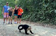 Monkey, Tour de 4 Horas al Parque Nacional Manuel Antonio