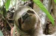 Sloth, Manuel Antonio National Park 8-Hour Tour