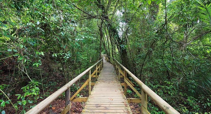 Into the Woods,  Manuel Antonio Park Hiking Tour
