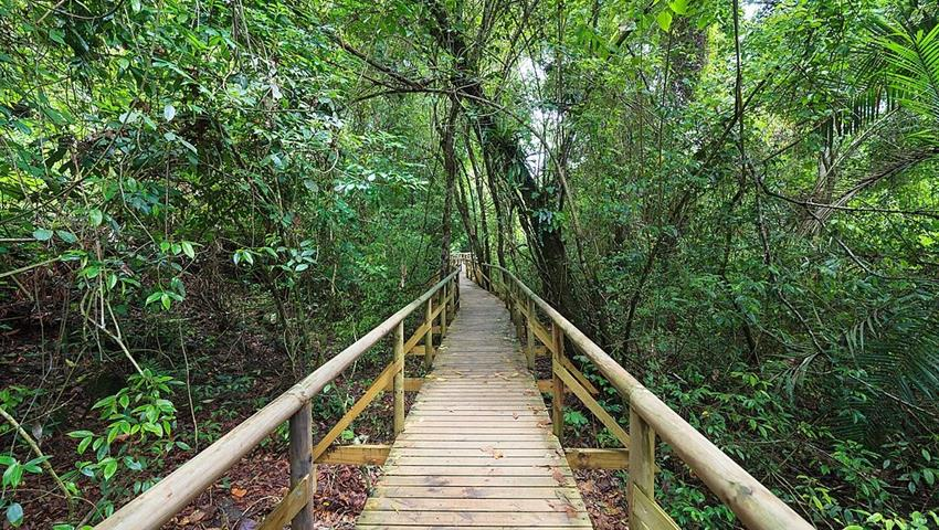 Into the Woods, Senderismo en el Parque Manuel Antonio