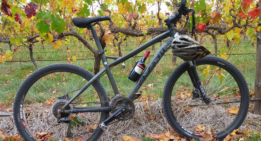 McLaren Vale Bike and Wine Day lunch bike wine, McLaren Vale Bike and Wine Day Tour