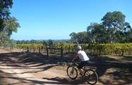 McLaren Vale Bike and Wine Day lunch vineyards, McLaren Vale Bike and Wine Day Tour