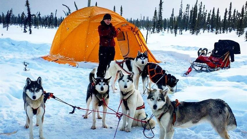 Dog Lovers Tiqy, Midnight Mushing Aurora Tour