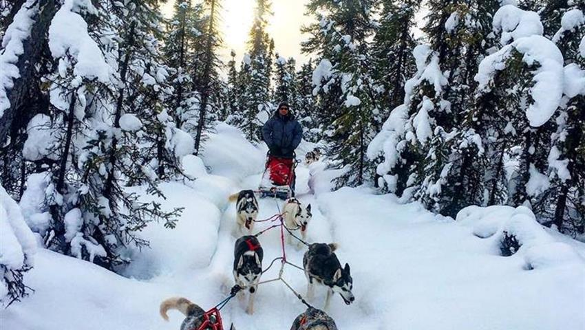 Mushing Tour Tiqy, Midnight Mushing Aurora Tour