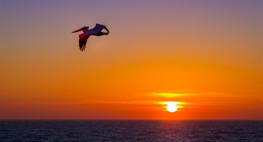 bird flying tiqy, Milbi Sunset